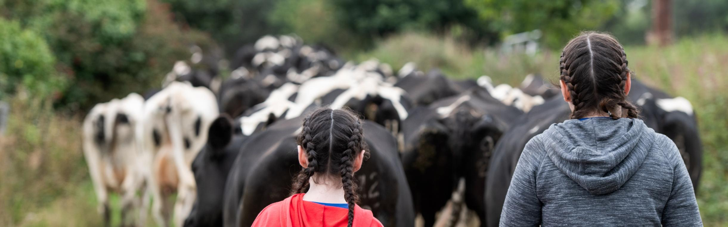 Two girls walking with cows